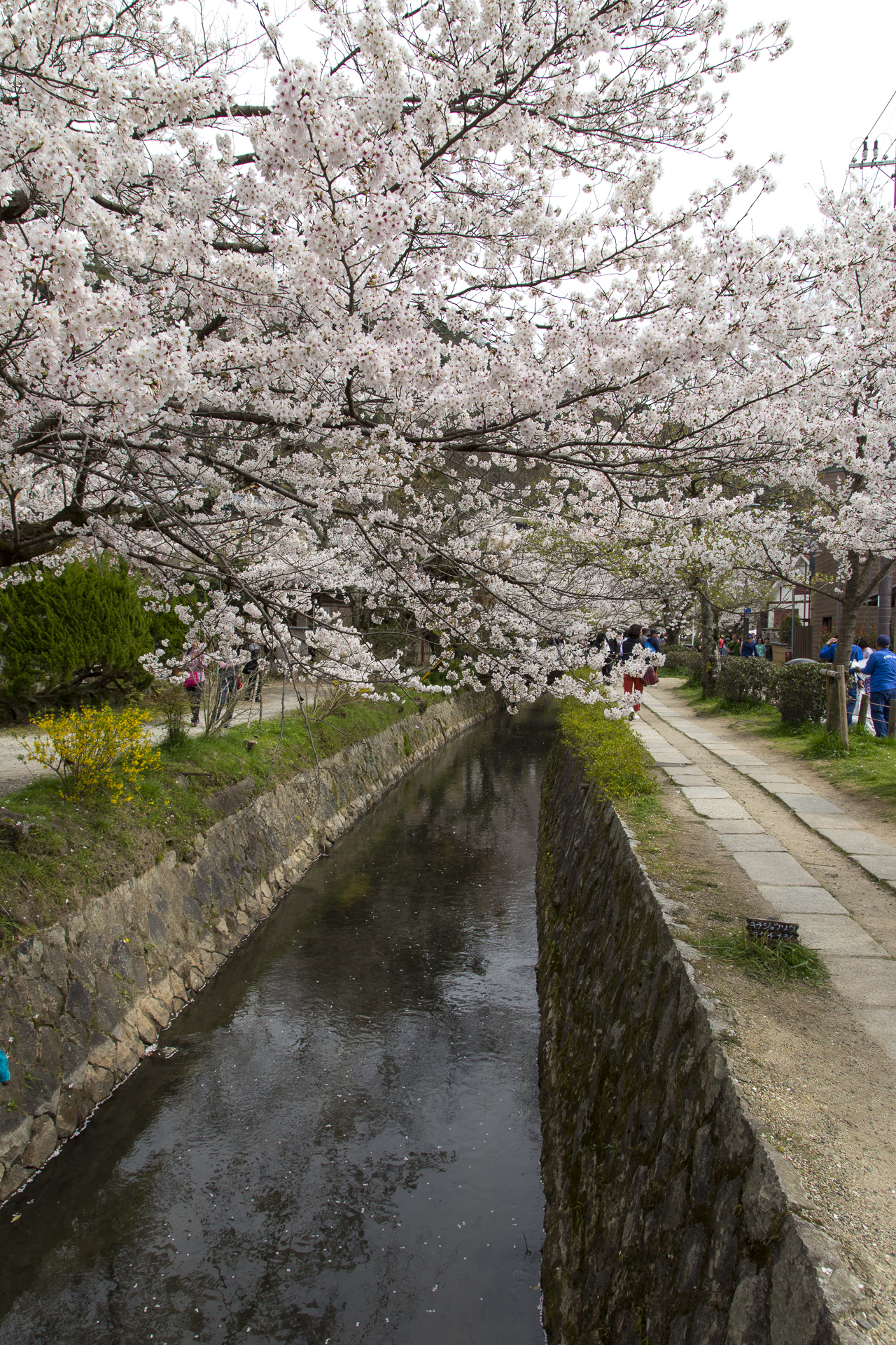 Day 11: Kyoto and Sakura (cherry blossoms)